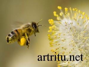 Лечение аллергического артрита