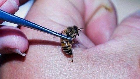 пчелолечение