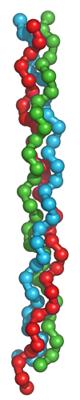 коллаген - фибриллярный белок