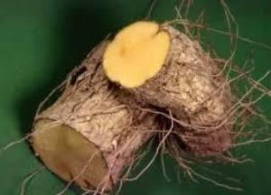 Адамов корень