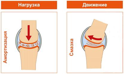 Изображение - Жидкое протезирование суставов fukcii-sustavnoi-jidkosti