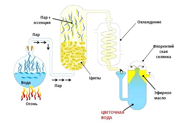 Изготовление эфирного масла