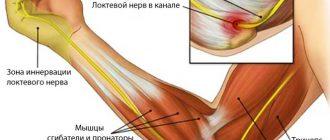 Локтевые мышцы