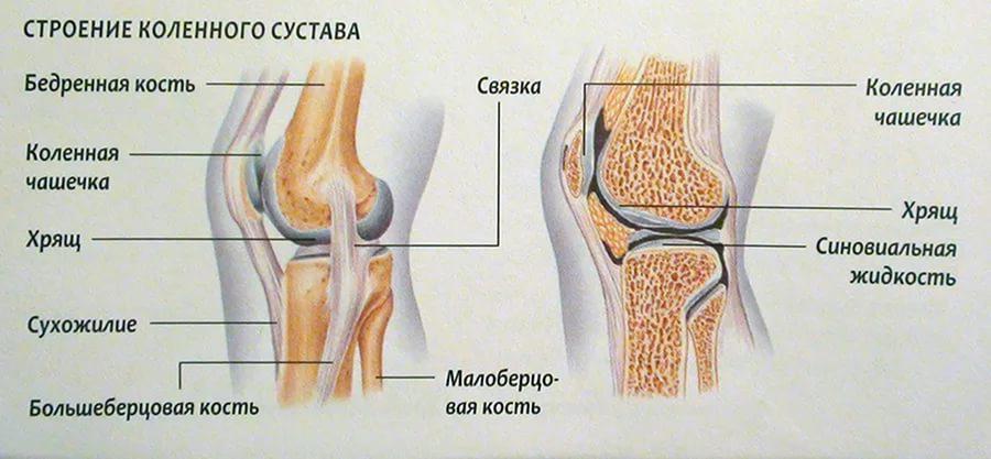 Изображение - Суставы колени лечение stroenie-kolennogo-sustava