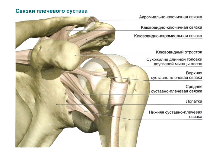 Изображение - Воспаление сустава плеча svyazki-plechevogo-sustava
