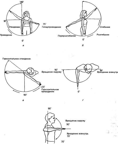 Анатомия движения
