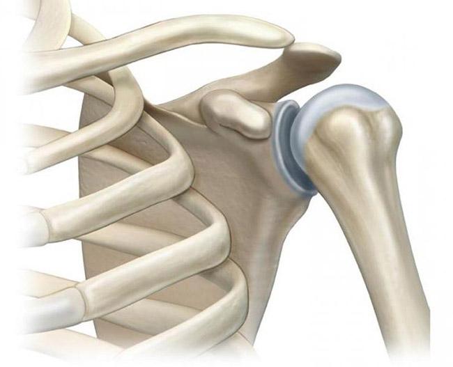 Анатомия плечевого сустава человека в норме