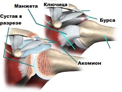Изображение - Вспомогательный аппарат плечевого сустава rotatornaya-manzheta