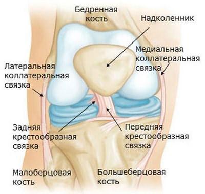 Строение капсульно-связочного аппарата коленного сустава