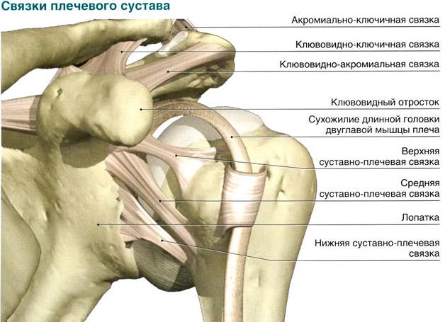 Плечевой сустав подробное строение у меня болит сустав на ноге
