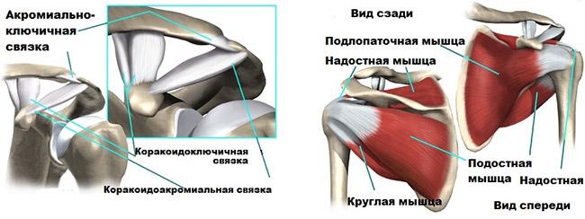 Изображение - Состав плечевого сустава vrashhatelnaya-manzheta