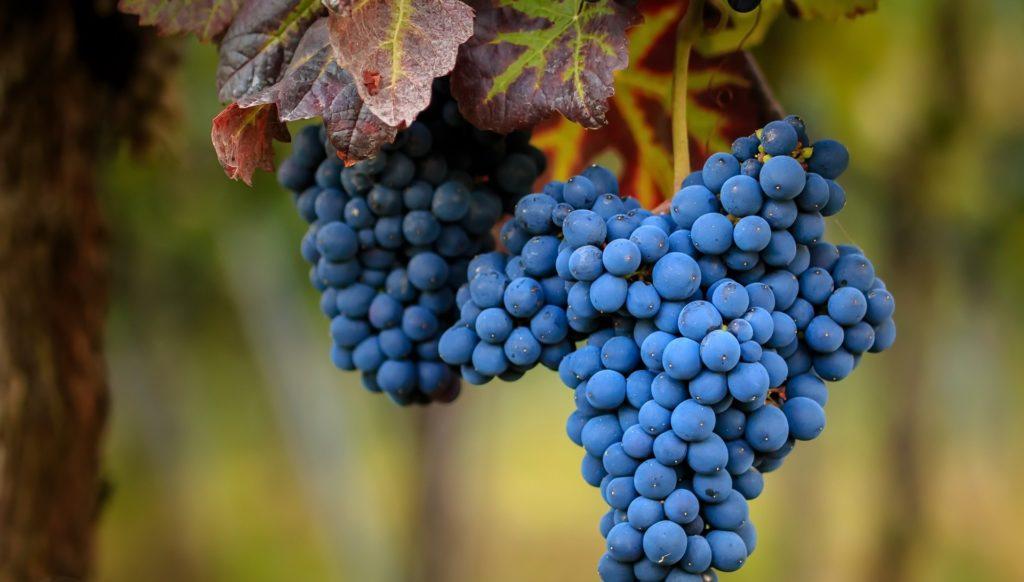 Можно ли кушать виноград при лечении подагры