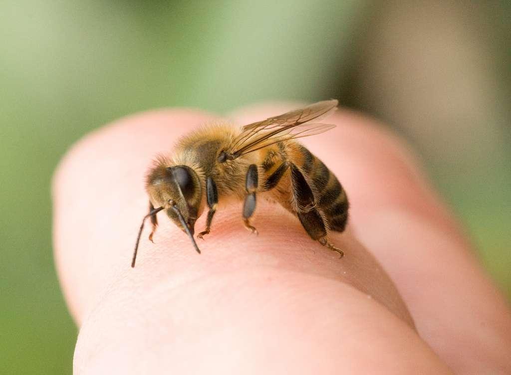 Пчёлы при остеохондрозе